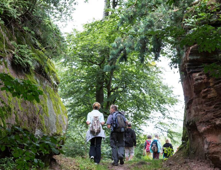 Des personnes se promenant sur le sentier de La Petite Pierre à Erckartswiller